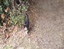 お出迎えしてくれた猫にエスコートしてもらったわ。。