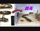 「蟲毒」の中に10000匹のアリを混ぜたら、神秘的な結果になった。