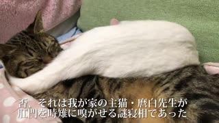 肛門の 匂い嗅がせる 猫団子