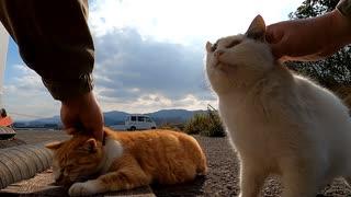 【声真似】声優試験100回落ちた男が、ドラえもんになりすまして野良猫と遊ぶ