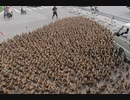 200,000 ducks dispatched for grasshopper extermination arrive in Pakistan safely