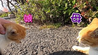 おチビ、母親と対面 ~ 猫じゃらし ~ シュールな終わり方のススメ