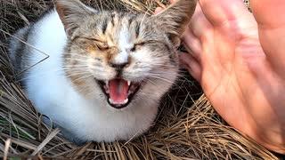 【神回!?】子猫に手をパーしたら触って~と要求された