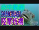 水中動画(2020年3月6日)in 陸軍桟橋