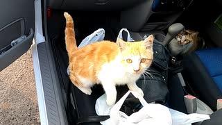 懐いた直後すぐ乗車!車内をあちこち見回す野良猫がかわいい♪