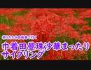 【1分弱車載前夜祭】巾着田曼珠沙華まったりサイクリング!【...