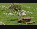 藍緑 'Baby Baby Baby' feat.GUMI