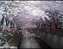 美礼どれみ「桜道」by MEIKO