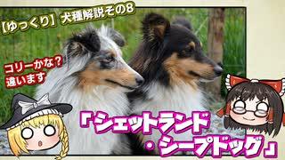 【ゆっくり犬種解説】その8「シェットランド・シープドッグ」
