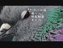 今日撮り野鳥動画まとめ3月17日