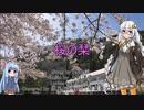 【歌うVOICEROID】桜の栞/ AKB48【紲星あかり】【琴葉葵】
