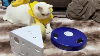 中国産電動猫おもちゃ、珍妙な猫たちを幻