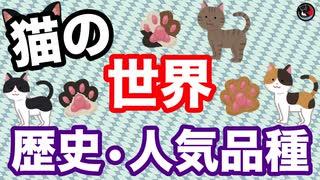 あなたはどんな猫が好き?? 猫の歴史はめっちゃ古い!