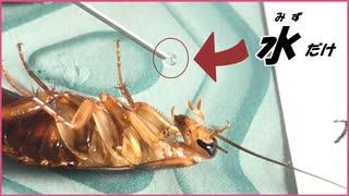 ゴキブリに何も食べさせず「水」だけ与えて何日生き延びるのか試したら末恐ろしい結果になった。