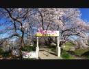 【ゆっくり】幸手権現堂桜堤RHA_00:09:00