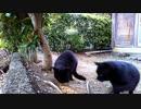食堂の野良猫 2020-03-26