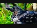 今日撮り野鳥動画まとめ3月26日