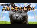 人生を変えた猫〜天国のぐれおじさん物語〜