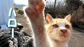 野良猫は綱の中にハマったが、実はハマってなかった件「この子はよく落ちる子猫です」