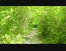Esprit de la Forêt | Temple d'Eros (feat. Shirayuki) (French Vocal Celtic Music)