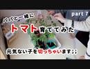 【パパと一緒に】トマト育ててみた part7【元気ないとこ切ってみる…】