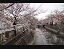 200329 一宮市大江川緑道(Ver.ニコ動)
