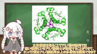 タンパク質の構造と役割【VOICEROID解説】