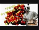 【Pandaro】アカリがやってきたぞっ【パンダが踊ってみたぞっ】