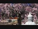 広島市近郊の神社巡り「観音神社」令和2年今が満開の「観音しだれ」桜 第二稿
