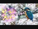 桜とカワセミづくし✨今日撮り野鳥動画まとめ4月3日