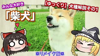 【ゆっくり犬種解説】「柴犬」リメイク版