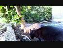 食堂の野良猫 2020-04-06