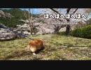 俺の休日:下北山村スポーツ公園へ桜を見に行ったよ、ウェル...
