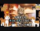 ゆっくりで語る生物解説 第1回 【生物学上のネコとイヌってなに?】