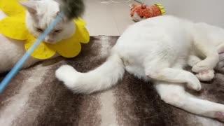 甘ったれ猫たち、ゴキゲン不機嫌ハウメニ