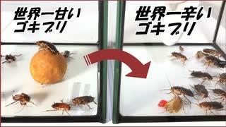 世界で一番甘いゴキブリを「激辛なゴキブリ」の群れにつっこんだら、想像を絶する結果になった。