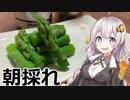 【あつまれ!1分弱料理祭】北海道産・朝採れアスパラの塩ゆで...