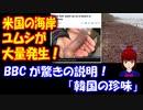 【海外の反応】 米国の ビーチに ユムシが 大量発生! BBCは 驚きの説明 「韓国の珍味!」