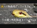 4月16日今日撮り野鳥動画まとめ シマヘビがいました