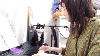 歌手May'nさん 歌の練習中にぬこに邪魔さ