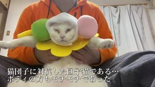 猫団子に対抗した団子猫、爆誕する
