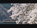【のら】撮り鉄のお花見2020