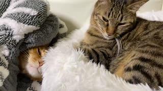猫型珍獣軍団、我が家を侵略する