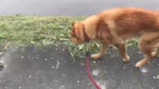 一瞬で体感できる犬の散歩