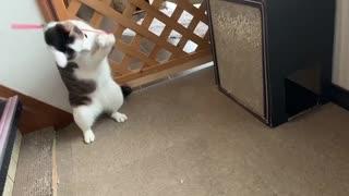 猫じゃらし一人遊び
