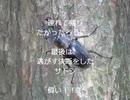 半島  【フルVer】DIY道楽 テツ一家のキャンプ2013年 本栖湖キャンプ場にて