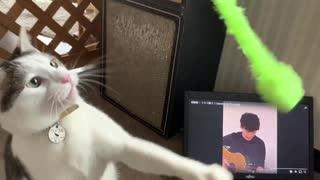 うちで踊ろう 曲に合わせて猫を踊らせてみた