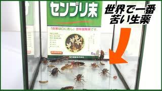 世界で一番苦い生薬「センブリ」をゴキブリに食べさせたら・・・。