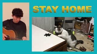 うちで踊ろう STAYHOME 家で猫と遊ぼう!