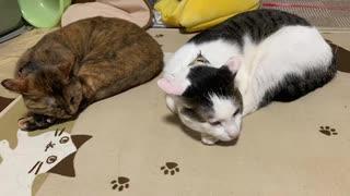めずらしく2匹がシンクロして寝てるなと。。。